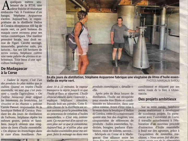 Article sur le Myrte vert, plante endémique de Corse